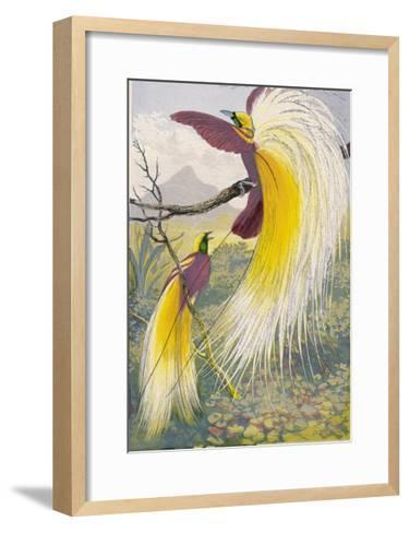 Bird of Paradise--Framed Art Print