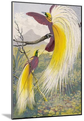 Bird of Paradise--Mounted Giclee Print