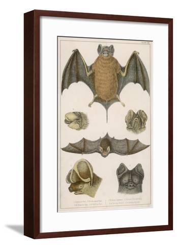 Various Species of Bat--Framed Art Print