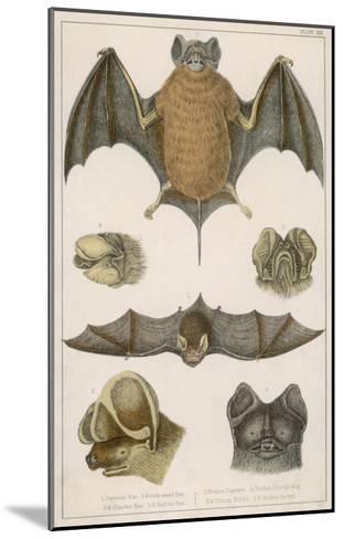 Various Species of Bat--Mounted Giclee Print