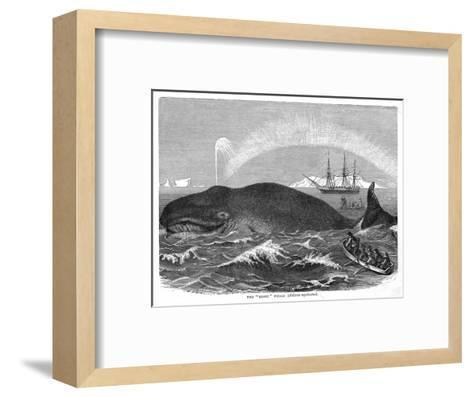 """A """"Right"""" Whale--Framed Art Print"""