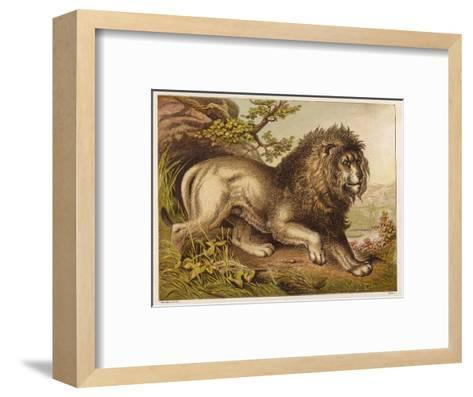 Fierce-Looking Lion from the Atlas Mountains of North Africa--Framed Art Print