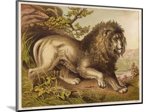 Fierce-Looking Lion from the Atlas Mountains of North Africa--Mounted Giclee Print