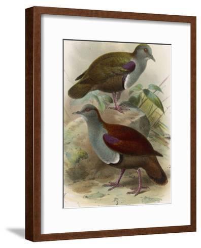 Ground Doves--Framed Art Print