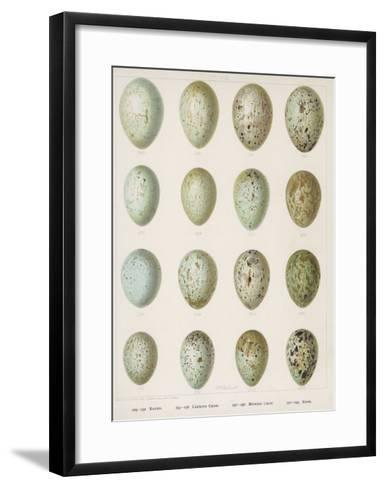 Eggs of Raven Crows Rooks and Jackdaws--Framed Art Print