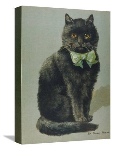 Handsome Black Cat Sir Thomas Mouser Sits Posed with a Green Ribbon Around His Neck--Stretched Canvas Print