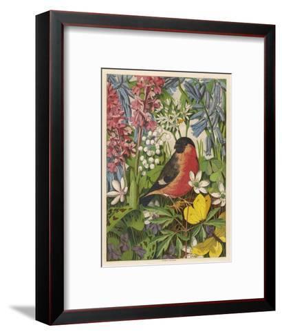 Bullfinch--Framed Art Print