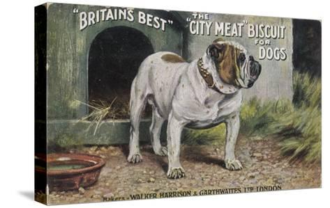 """Bulldog Stands Outside His Kennel in an Advertisement for """"City Meat"""" Dog Biscuits--Stretched Canvas Print"""