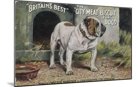 """Bulldog Stands Outside His Kennel in an Advertisement for """"City Meat"""" Dog Biscuits--Mounted Giclee Print"""