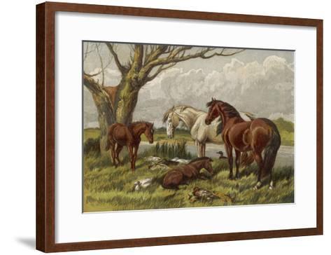 Horses in a Field--Framed Art Print