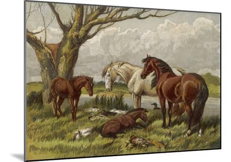 Horses in a Field--Mounted Giclee Print