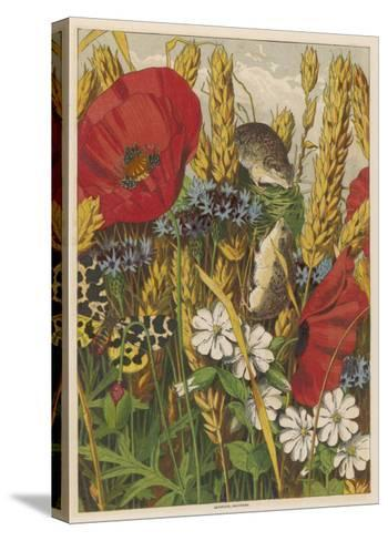 Two Harvest Mice Among the Ears of Corn and Poppies--Stretched Canvas Print