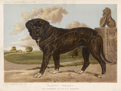 An Aristocratic Mastiff in the Grounds of a Stately Home--Stretched Canvas Print