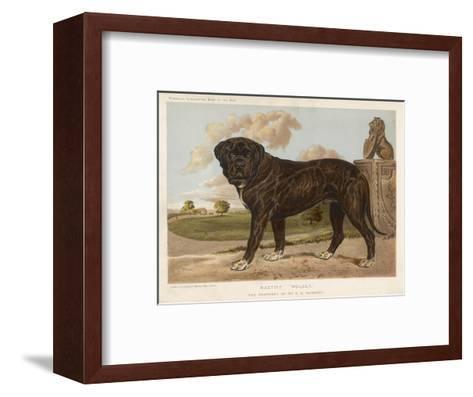 An Aristocratic Mastiff in the Grounds of a Stately Home--Framed Art Print