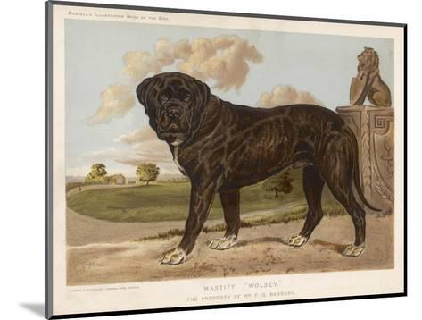 An Aristocratic Mastiff in the Grounds of a Stately Home--Mounted Giclee Print