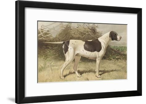 Classic Pointer Standing in the Field--Framed Art Print