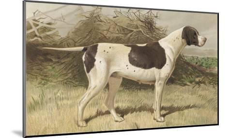 Classic Pointer Standing in the Field--Mounted Giclee Print