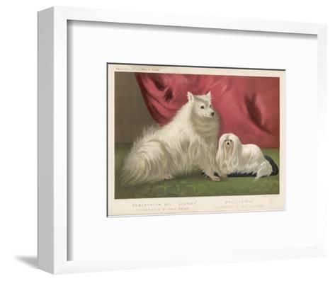 This Pomeranian Looks Quite Large Beside a Maltese Terrier--Framed Art Print