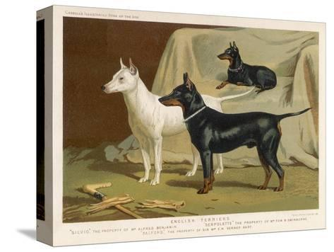 Toy Terrier, White Terrier, Black and Tan Terrier--Stretched Canvas Print