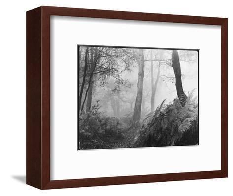 An Eerie Misty Wood with Ferns Near Esher Common Surrey England--Framed Art Print