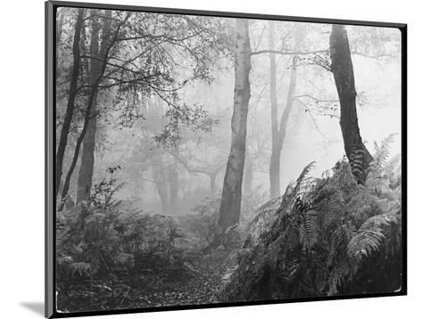 An Eerie Misty Wood with Ferns Near Esher Common Surrey England--Mounted Giclee Print