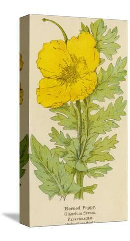Horned Poppy-Mabel E. Step-Stretched Canvas Print
