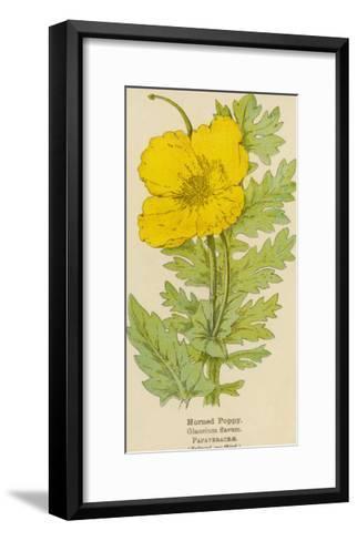 Horned Poppy-Mabel E. Step-Framed Art Print