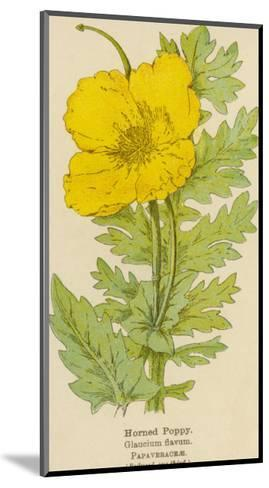 Horned Poppy-Mabel E. Step-Mounted Giclee Print