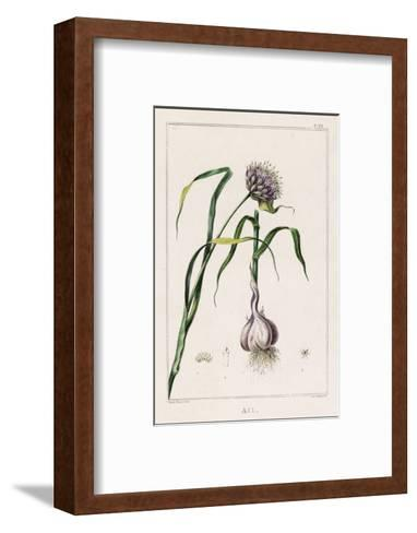 Garlic Showing the Purple Flower and the Bulb--Framed Art Print