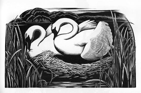 Two Swans-Clifford Webb-Stretched Canvas Print