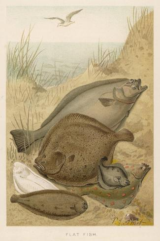 Group of Mixed Flat Fish: Halibut Turbot Flounder Plaice and Sole-P. J. Smit-Stretched Canvas Print