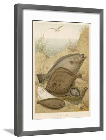 Group of Mixed Flat Fish: Halibut Turbot Flounder Plaice and Sole-P. J. Smit-Framed Art Print