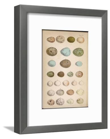 Eggs of Two Dozen Birds--Framed Art Print