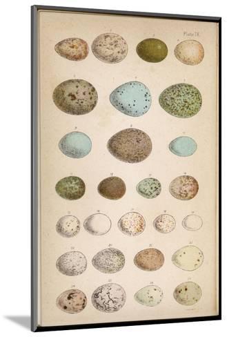 Eggs of Two Dozen Birds--Mounted Giclee Print