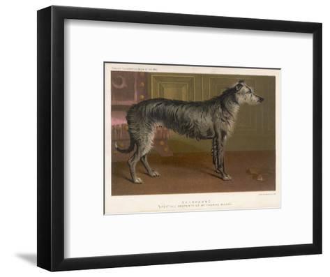 Dark Grey Deerhound Stares Thoughtfully into the Distance--Framed Art Print