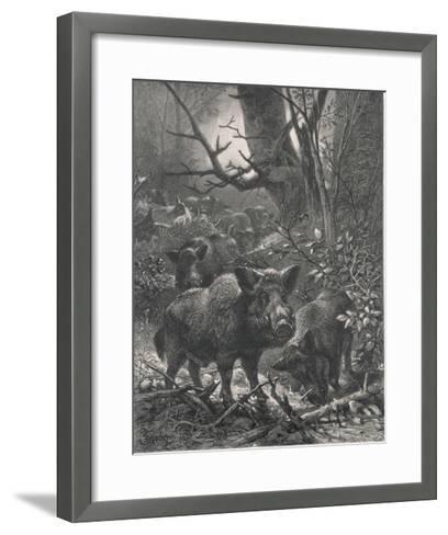 Herd of Wild Boar Wander Through the Woods-Specht-Framed Art Print