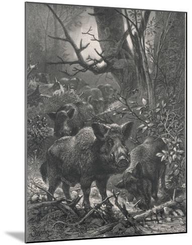 Herd of Wild Boar Wander Through the Woods-Specht-Mounted Giclee Print
