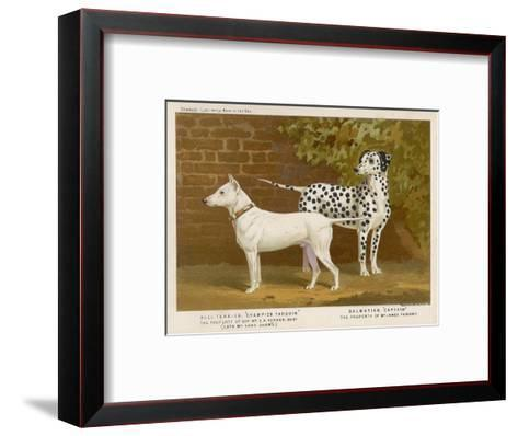 Dalmatian and a Bull Terrier Stand Side by Side Gazing at Something in the Distance--Framed Art Print