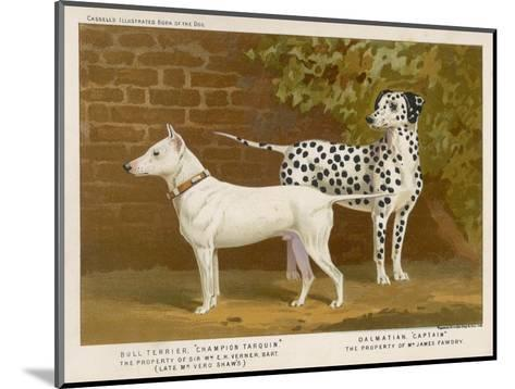 Dalmatian and a Bull Terrier Stand Side by Side Gazing at Something in the Distance--Mounted Giclee Print