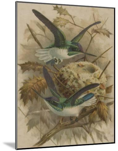 Two Green Birds Nest Building--Mounted Giclee Print