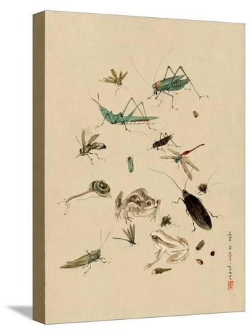 Insects and Toads--Stretched Canvas Print