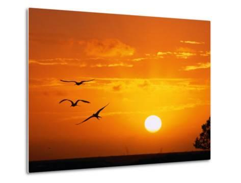 Frigate Birds Soaring at Sunrise, Cayos Cochinos, Islas De La Bahia, Honduras-Ralph Lee Hopkins-Metal Print