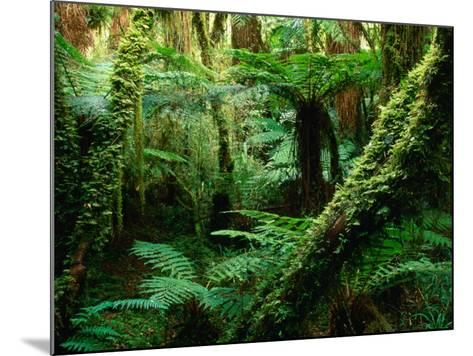 Trees and Ferns in Beech Forest, Oparara, New Zealand-Oliver Strewe-Mounted Photographic Print