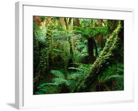 Trees and Ferns in Beech Forest, Oparara, New Zealand-Oliver Strewe-Framed Art Print
