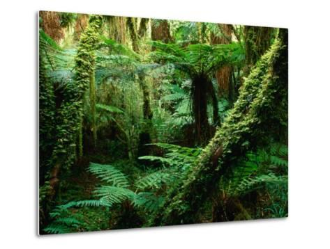 Trees and Ferns in Beech Forest, Oparara, New Zealand-Oliver Strewe-Metal Print