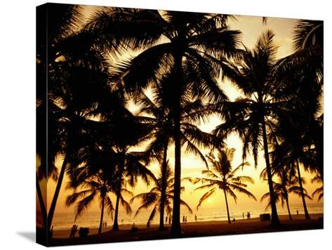 Palms in Evening on Kovalam Beach, Kovalam, Kerala, India-Greg Elms-Stretched Canvas Print