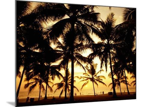 Palms in Evening on Kovalam Beach, Kovalam, Kerala, India-Greg Elms-Mounted Photographic Print