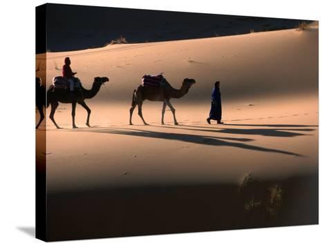 Camel Caravan Crossing Dunes, Erg Chebbi Desert, Morocco-John Elk III-Stretched Canvas Print