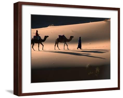 Camel Caravan Crossing Dunes, Erg Chebbi Desert, Morocco-John Elk III-Framed Art Print