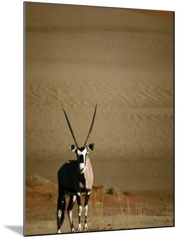 Gemsbok, or South African Oryx ( Oryx Gazella ), in Sand Dunes, Namib Desert Park, Namibia-David Wall-Mounted Photographic Print